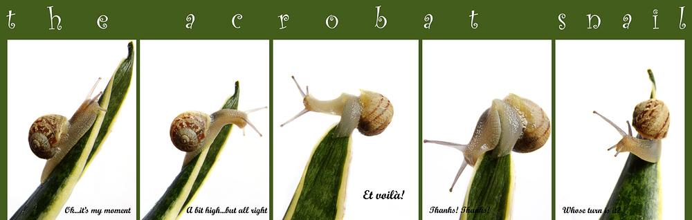 The Acrobat Snail