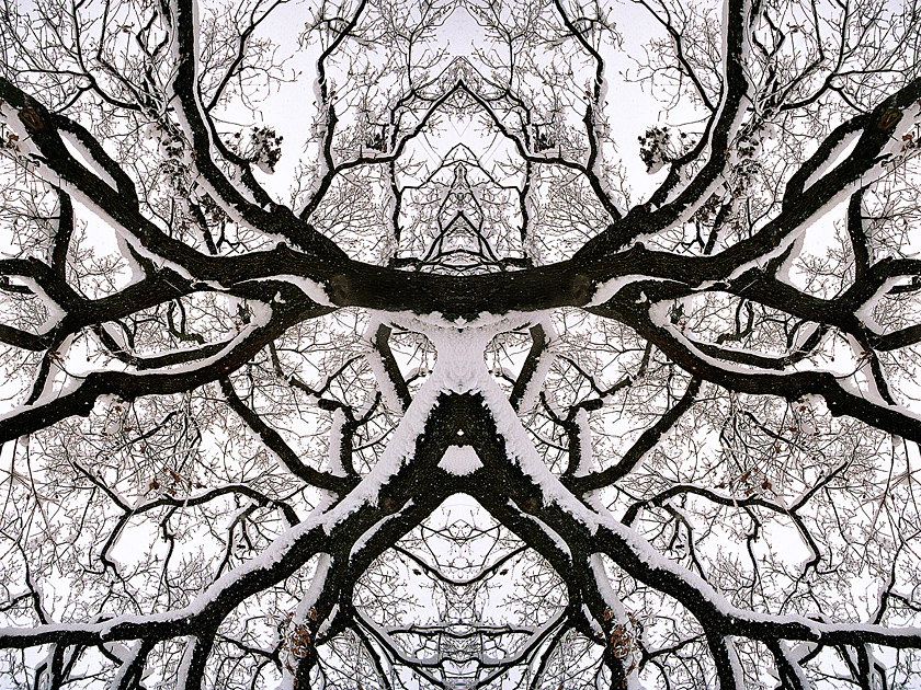 Branched Fantasies